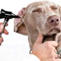 13 Accueil recours pour Dog Ear Infection