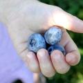 16 Services de santé de Blueberry