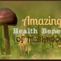 16 raisons saines pour profiter de manger des champignons