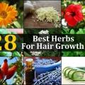 28 meilleures plantes pour la croissance des cheveux