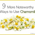 9 utilisations remarquables pour la camomille vous devez essayer