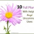 Automne plantes avec des utilisations utiles que vous ignoriez à propos