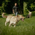 Frankie le chien sent cancer de la thyroïde