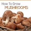 Cultivez vos propres champignons naturellement à la maison!