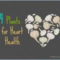 La santé cardiaque et thérapie de soutien avec des plantes