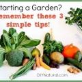 Conseils importants à considérer avant de commencer un jardin