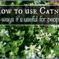 Mes trois façons préférées de l'herbe à chat sur les humains utilisent