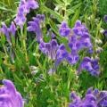 Calotte de herbe naturelle aide à soulager les symptômes du psoriasis