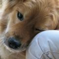 Posséder un animal de compagnie bénéfique pour la santé et le bien-être