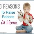 Six raisons de commencer à élever des lapins à la maison
