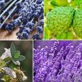 Top 10 des herbes naturelles pour l'anxiété et le stress