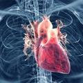 Top 15 superaliments pour abaisser la pression artérielle élevée