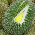 10 avantages étonnants de durians