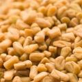 8 Effets secondaires de graines de fenugrec Ce Vous devez être conscient de
