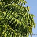 Avantages naturels de neem pour votre visage et de la peau