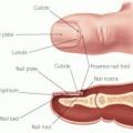Ongles sains et les cuticules