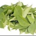 Comment utiliser Curry Leaves Pour la croissance des cheveux?