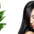 Comment utiliser les feuilles de curry pour la croissance des cheveux