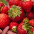 La bonté de fraises pour la peau