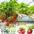 Top 10 des fruits pour les diabétiques