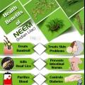 Top 10 des avantages pour la santé de neem (lilas indienne)