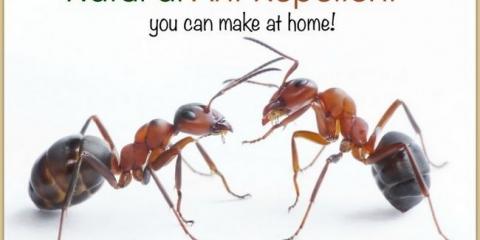 Un spray simple et efficace qui repousse les fourmis naturellement