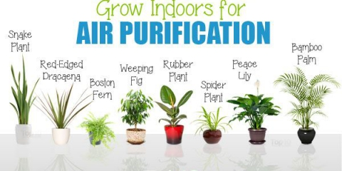 10 meilleures plantes que vous pouvez cultiver à l'intérieur de purification d'air