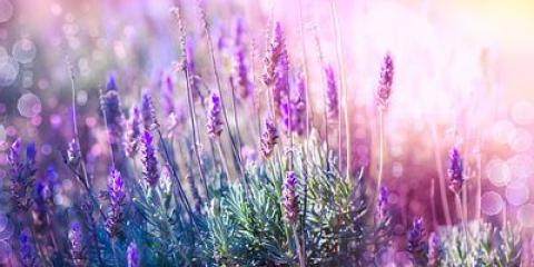10 Les herbes médicinales que vous pouvez faire pousser à la maison