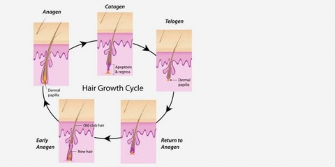3 phases de cycle de croissance des cheveux
