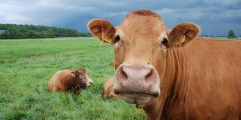 Une réponse à la viande bovine Ryan Nolan: deuxième partie