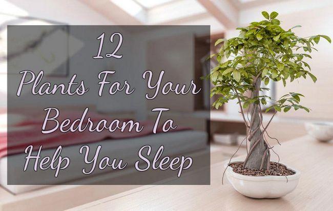 Plantes Pour Votre Chambre  Coucher Pour Vous Aider  Dormir